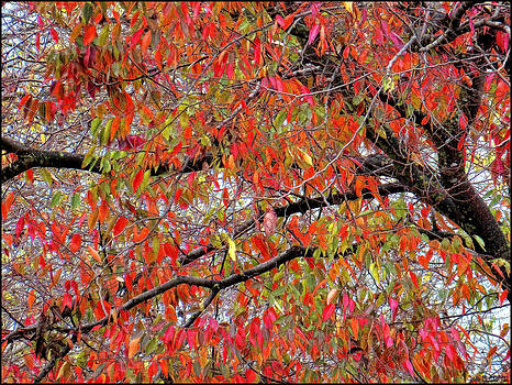 Elm Tree in Autumn by Gina  Art Photography