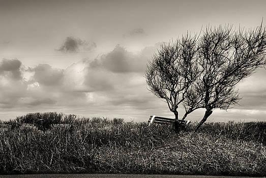 Empty Bench Naked Trees by Bob Orsillo