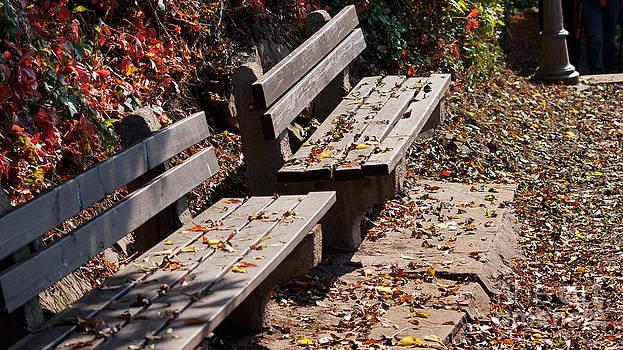 Empty benches in autumn by Eva-Maria Di Bella