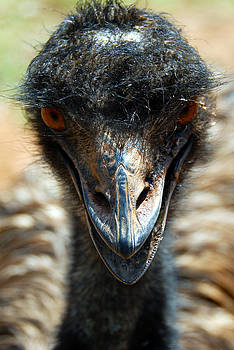 Emu Eye Spy by Glen Johnson