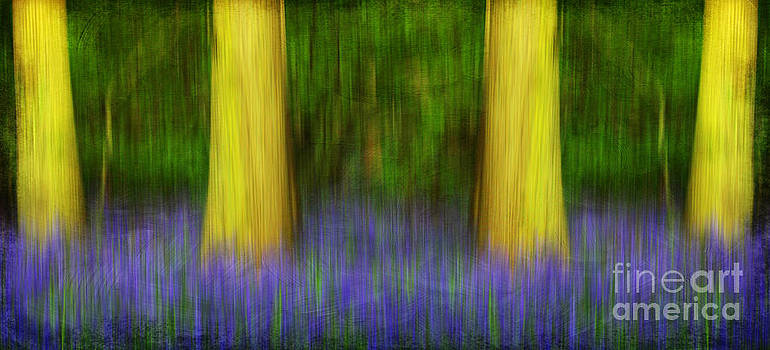 Enchanted Bluebell Woods by Lisa Cockrell