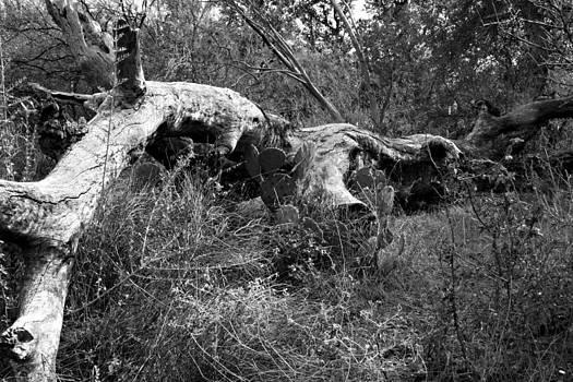 Enchanted Rock Fallen Tree by Bryan Davis
