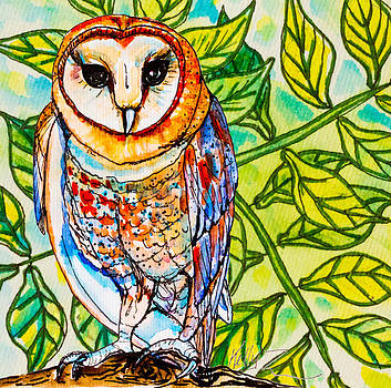 Endangered Barn Owl by Kelly     ZumBerge
