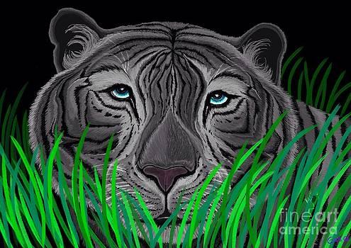 Nick Gustafson - Endangered White Tiger