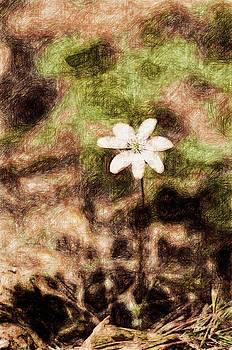 Endgraving Forest 14 by Yevgeni Kacnelson
