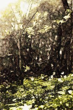 Endgraving Forest 9 by Yevgeni Kacnelson