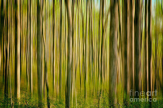 Dan Carmichael - Endless Forest II