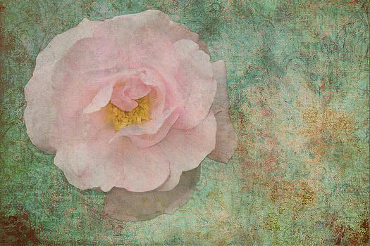 Liz  Alderdice - English Rose