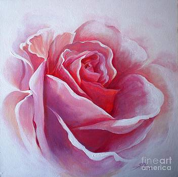 English Rose by Sandra Phryce-Jones