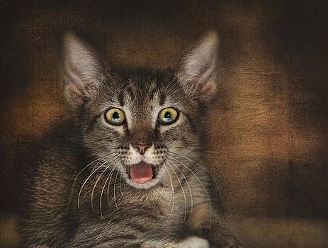 Esmarelda Yawns by Pat Abbott