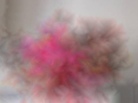 Esplosione Rosa by Costanza Canali
