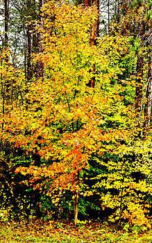Essential Autumn Color by Patrick Derickson