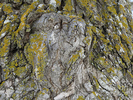 ET Face in Tree by Mary Mikawoz