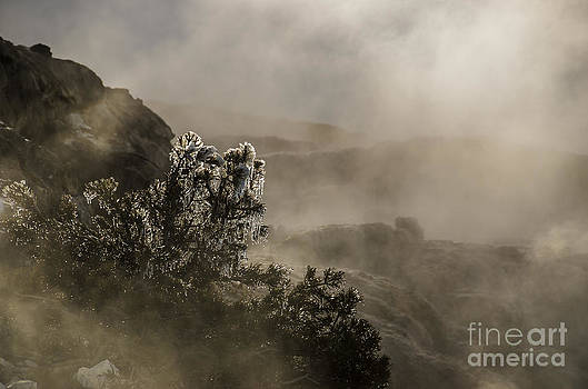 Ethereal Beauty by Sue Smith