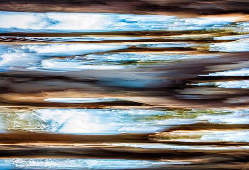 Eucalyptus Lines by Janice Sullivan
