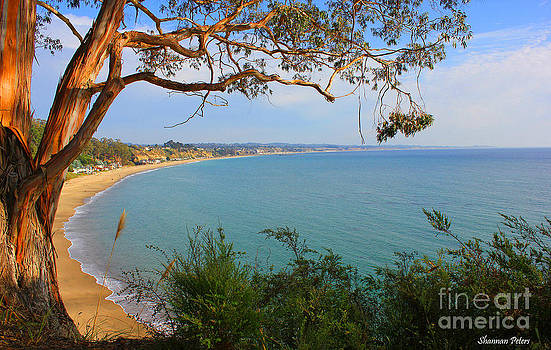 Eucalyptus with a View by Shannan Peters