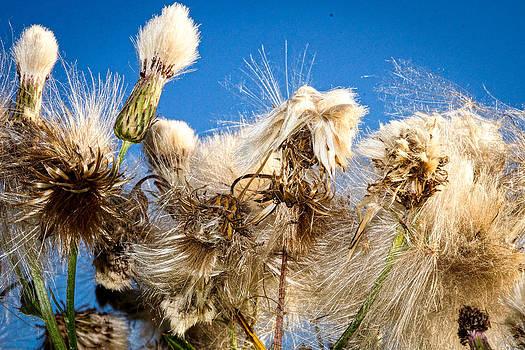Even Weeds by Randy  Shellenbarger