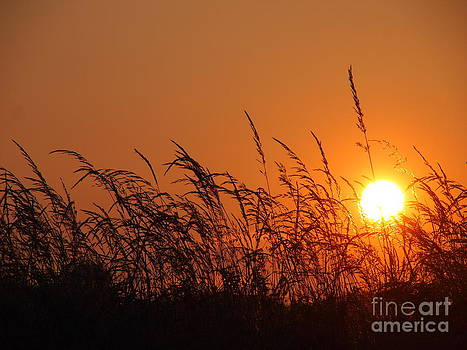 Evening Fireball in the Grass by Elizabeth Debenham
