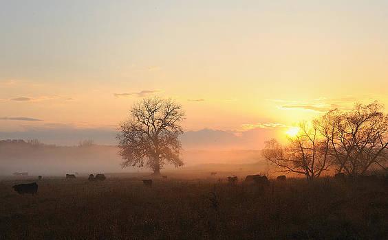 Evening Fog  by Sarah Rodefeld