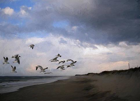 Evening Gulls by Forest Stiltner