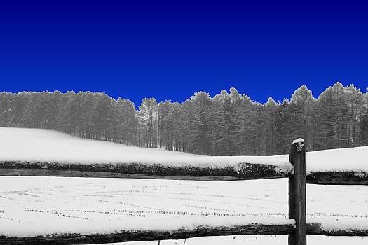 Evening Snow Storm by Gary Pavlosky