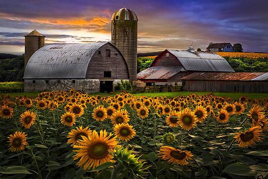 Debra and Dave Vanderlaan - Evening Sunflowers