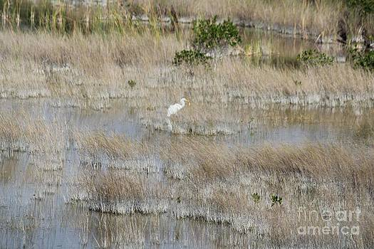 Everglades Canvass by Theresa Willingham