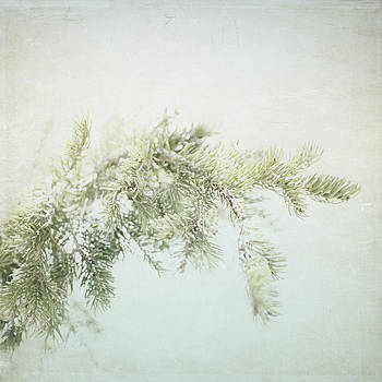 Evergreen - Square by Lisa Parrish