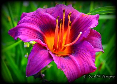 Exotic Purple by Terri K Designs
