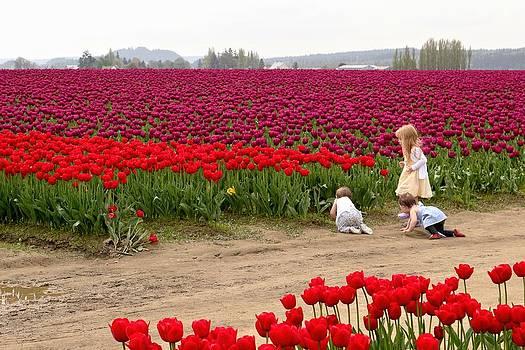 Exploring the Tulip Fields by Jennifer Wheatley Wolf