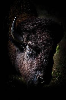 Eye of the Buffalo by Swift Family
