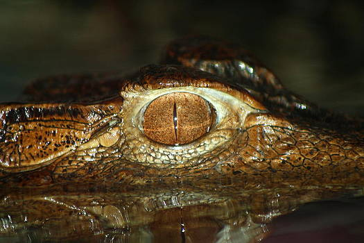 Eye of The Croc by Jim Johnson