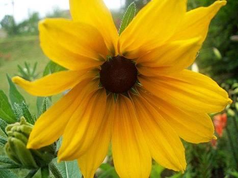 Eye of the Flower by Megan Everett