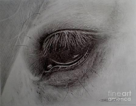 Eye of the Horse    by Barbra Joan