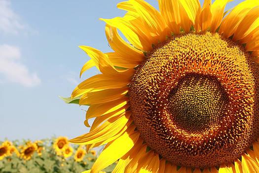 Eye of the sun by Diana Dimitrova