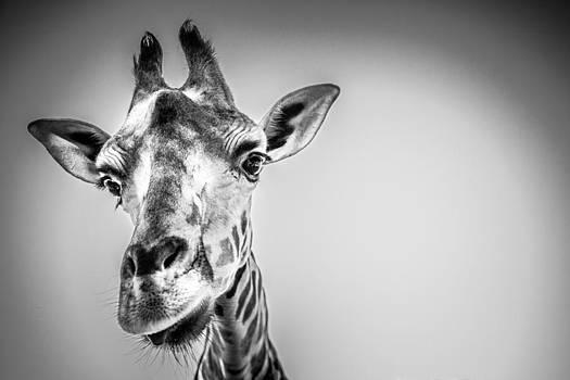 Eye Spy a Giraffe by Brent Roberts
