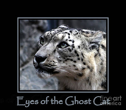Nick Gustafson - Eyes of the Ghost Cat