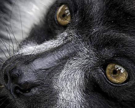 Eyes of the Lemur by Chris Boulton