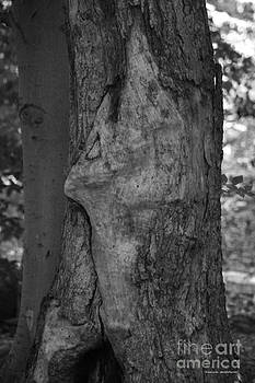 Tannis  Baldwin - Face in the Tree 1 BW