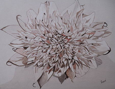 Faded Blossom by Hilda and Jose Garrancho