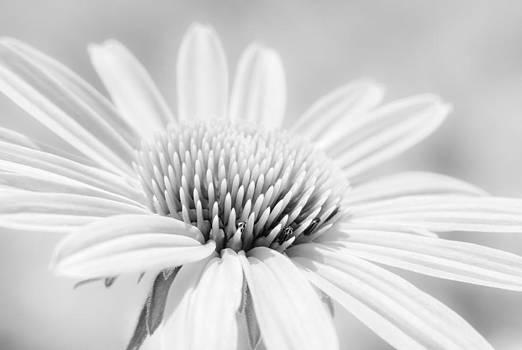 Faded Blossom by Josh Camero