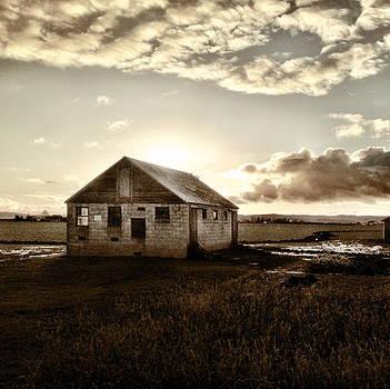 Faded Field by Anna Bree