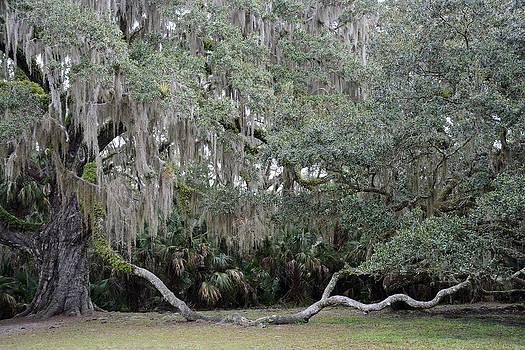 Fairchild Oak Tree Bulow Creek by Bruce Gourley