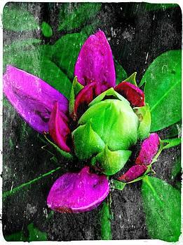 Fairy bloom  by Natalya Karavay