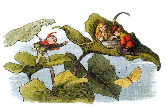 Photo Researchers - Fairy Courtship Cut Short