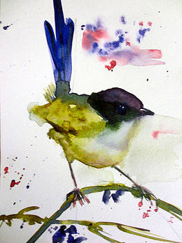 Fairy Wren by Charu Jain