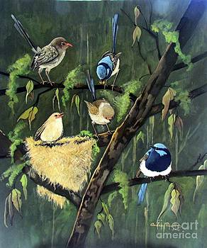 Fairy wrens feeding the  last chick by Audrey Russill
