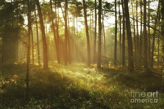 LHJB Photography - Fairytale woods