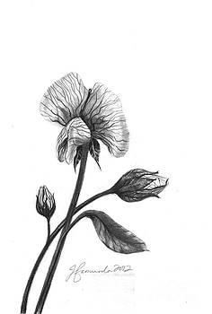 Faith Of A Flower by J Ferwerda