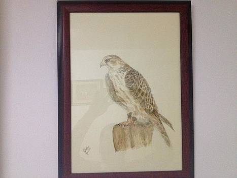 Falcon by Ghafour Mohd